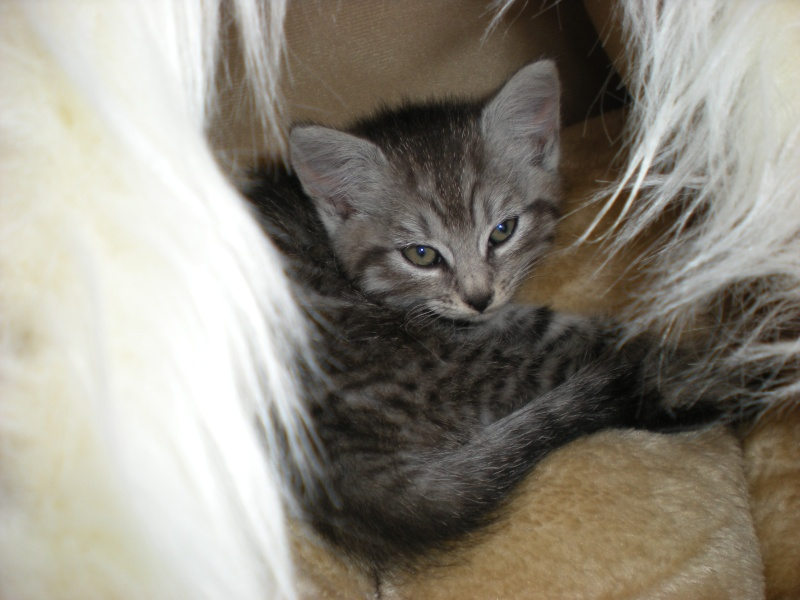 Miss Kitty Chaton10
