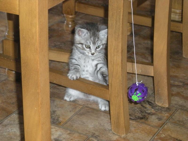 Miss Kitty Kitty_11
