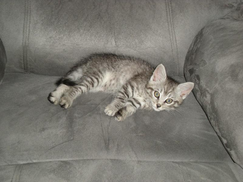 Miss Kitty Kitty_12