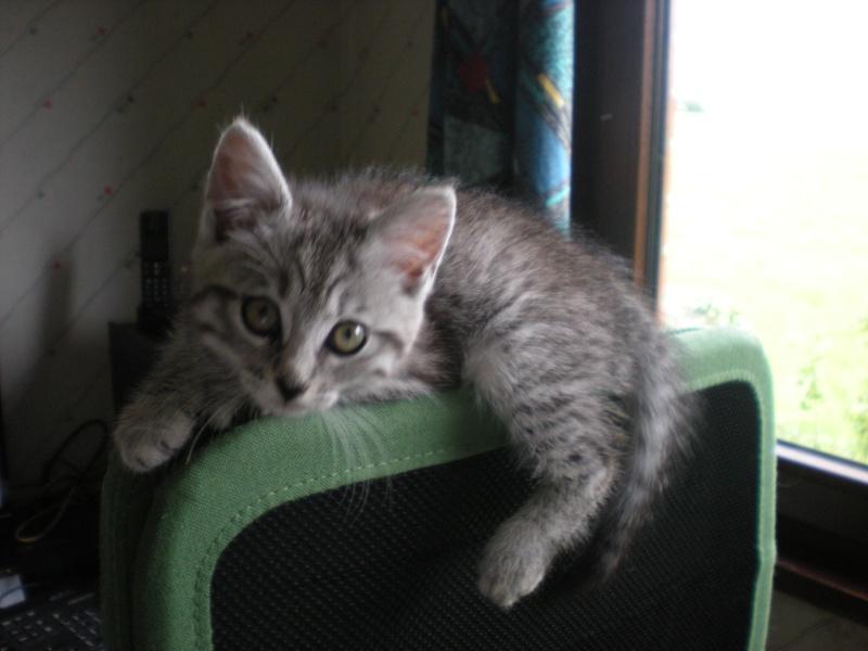 Miss Kitty Kitty_13