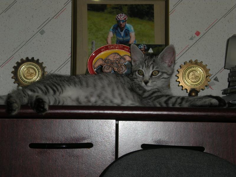 Miss Kitty Kitty_16