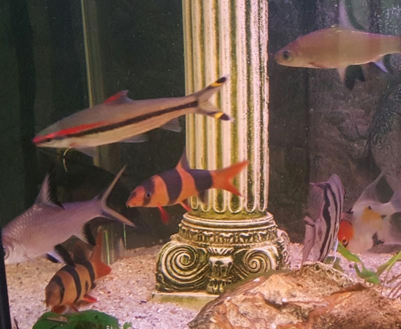 Futurs poissons à la vente 1110