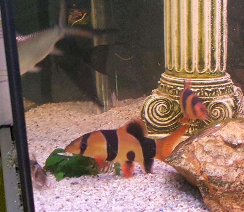Futurs poissons à la vente 2210