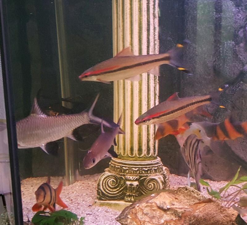 Futurs poissons à la vente 3310