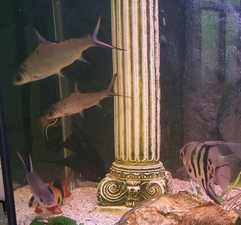 Futurs poissons à la vente 4410