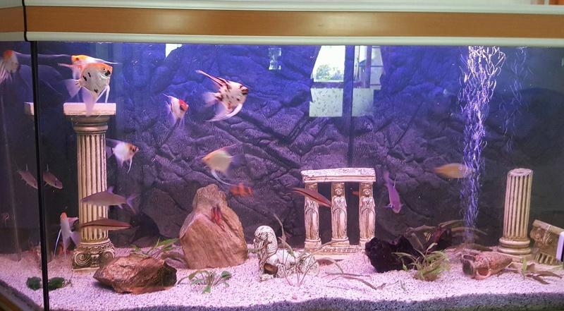 Futurs poissons à la vente Grand_10