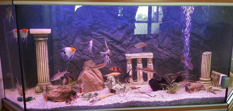 Futurs poissons à la vente Grand_12
