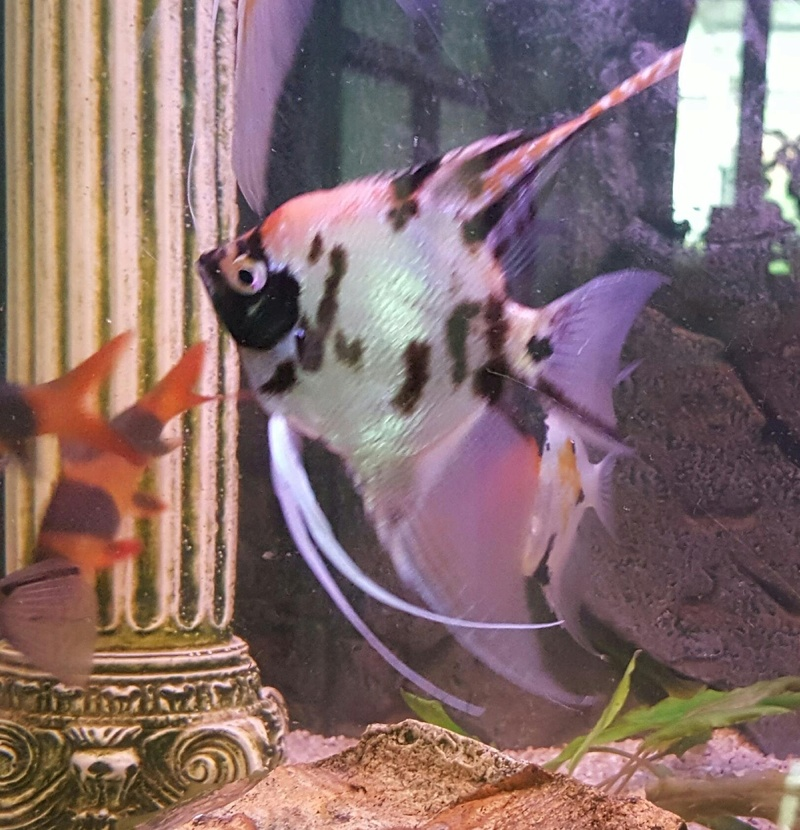 Futurs poissons à la vente Scalai11