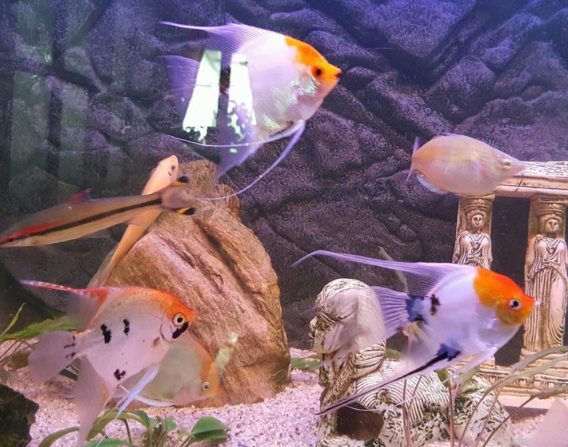Futurs poissons à la vente Scalai12