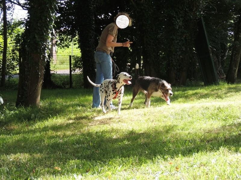 BILL le chien - Page 4 Diman103