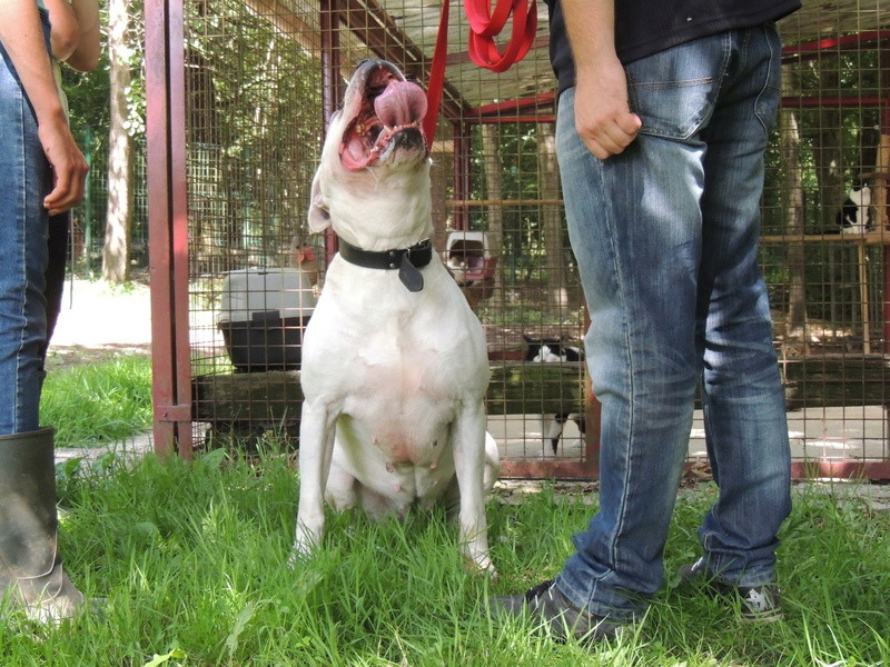 KAYA Femelle DOG ARGENTIN - Page 2 Diman108