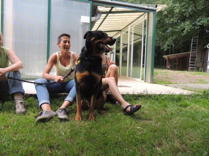 Séance jeu et câlins avec nos chiens Diman122