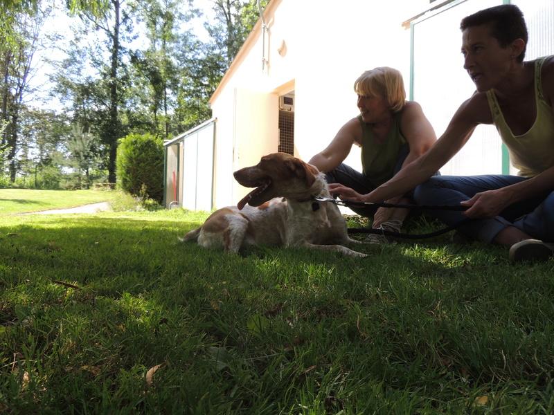 Séance jeu et câlins avec nos chiens Diman124