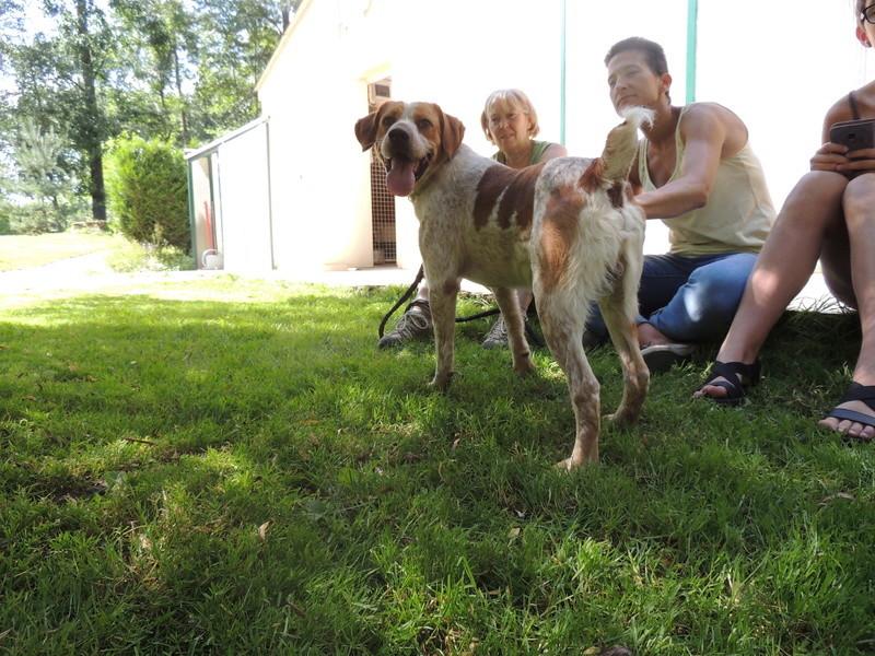 Séance jeu et câlins avec nos chiens Diman125