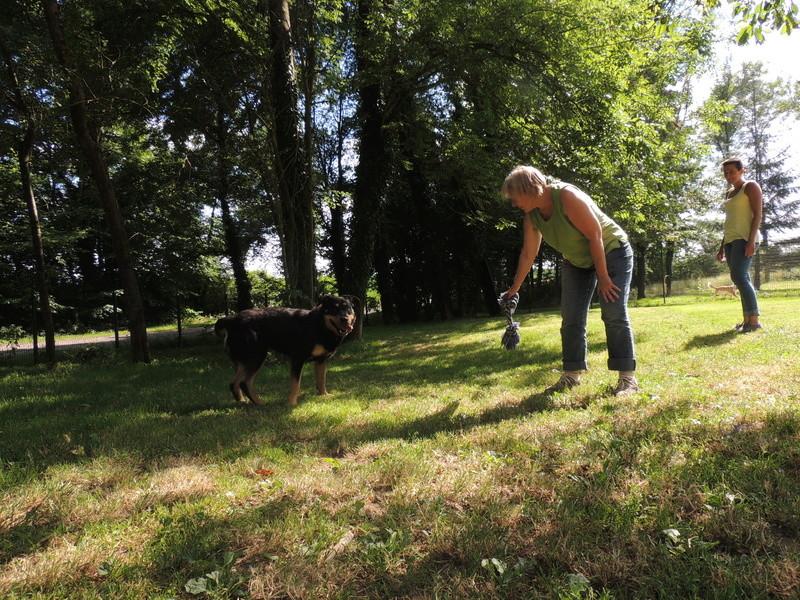 Séance jeu et câlins avec nos chiens Diman128