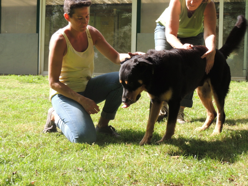 Séance jeu et câlins avec nos chiens Diman129