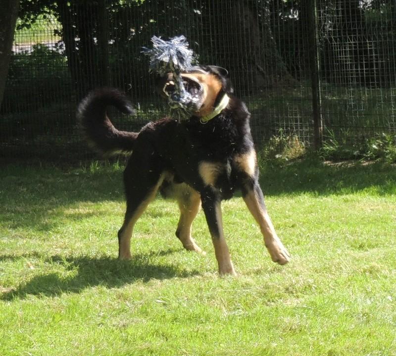 Séance jeu et câlins avec nos chiens Diman130