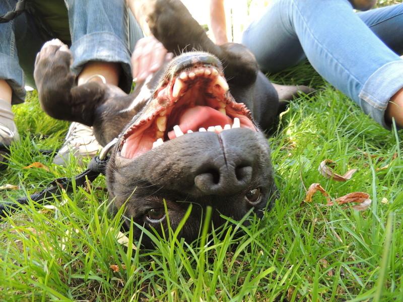 Séance jeu et câlins avec nos chiens Diman131