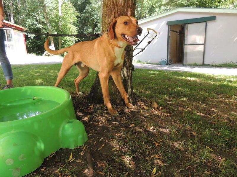 Séance jeu et câlins avec nos chiens Diman133