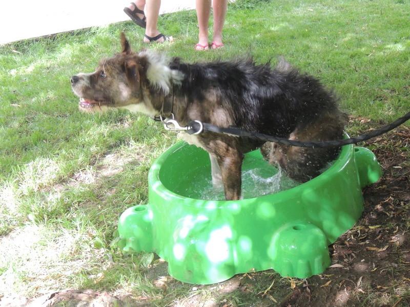 Séance jeu et câlins avec nos chiens Diman135