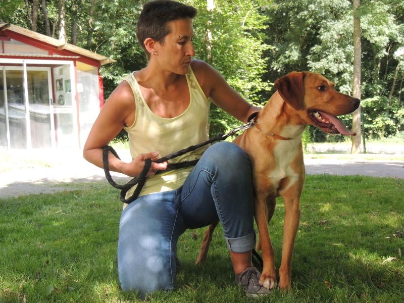 Séance jeu et câlins avec nos chiens Diman136