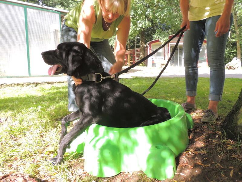 Séance jeu et câlins avec nos chiens Diman142