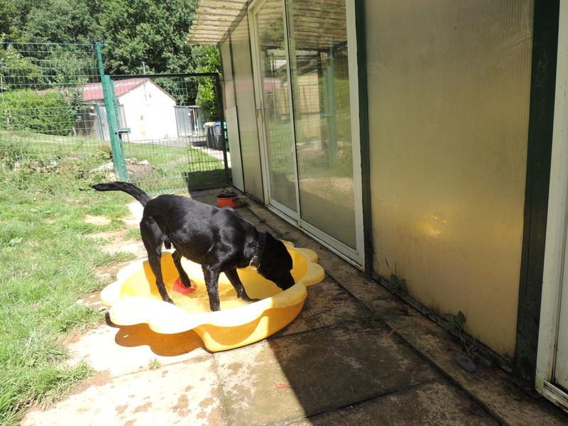 Séance jeu et câlins avec nos chiens Diman151