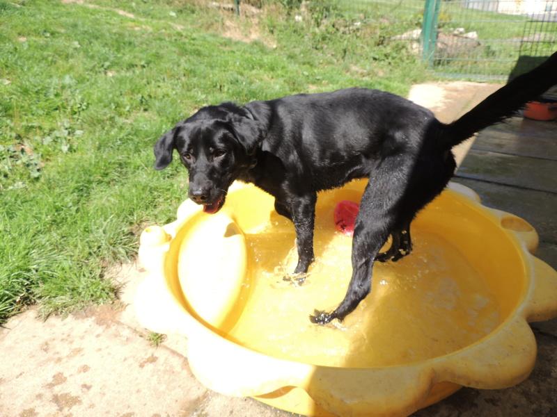 Certains de nos chiens aiment l'eau . Diman152