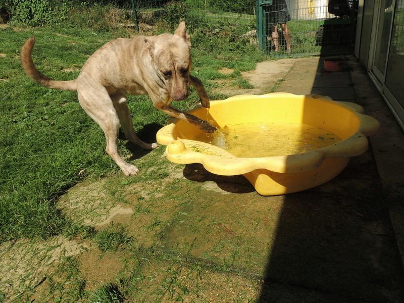 Certains de nos chiens aiment l'eau . Diman154
