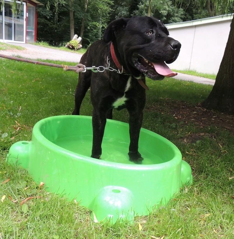 Certains de nos chiens aiment l'eau . Diman157