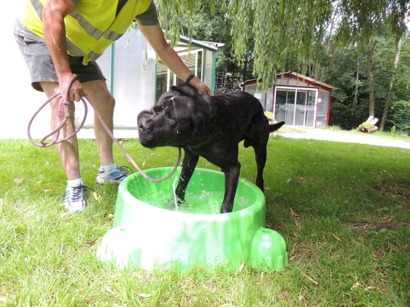 Certains de nos chiens aiment l'eau . Diman158