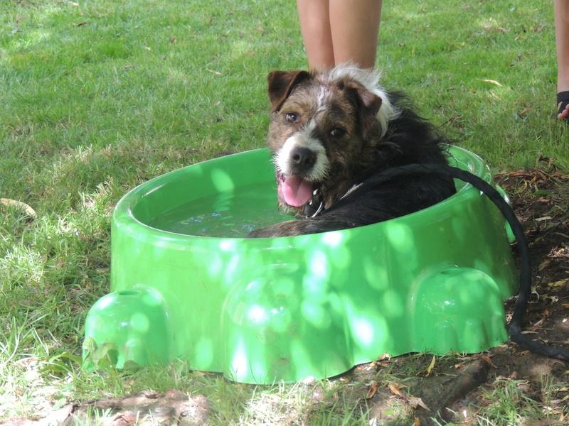 Certains de nos chiens aiment l'eau . Diman163