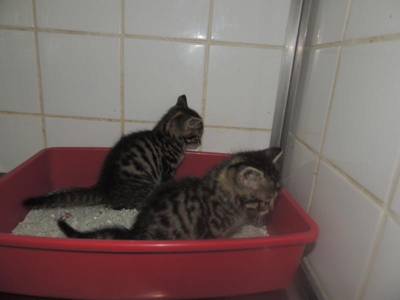 Arrivée de 4 chatons Pumba, Mario, Pépito et Pilou Jeudi_33