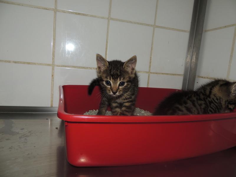 Arrivée de 4 chatons Pumba, Mario, Pépito et Pilou Jeudi_34