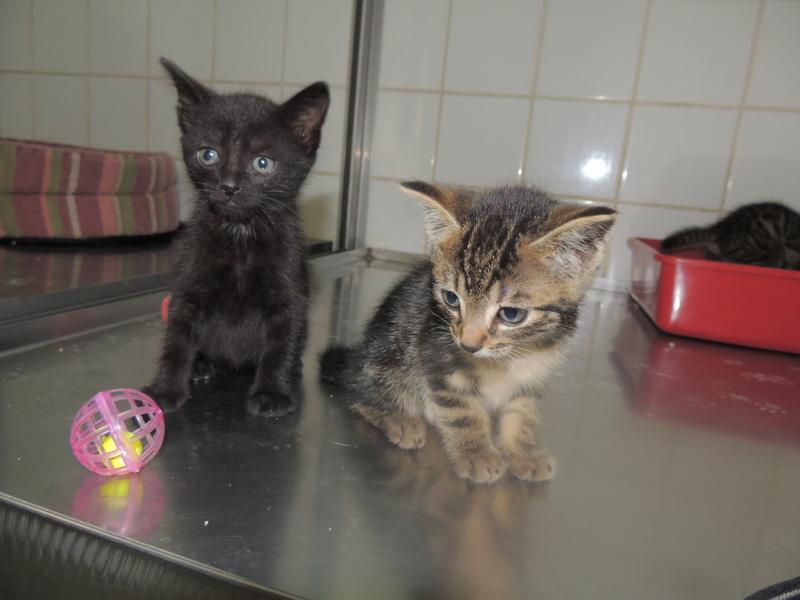 Arrivée de 4 chatons Pumba, Mario, Pépito et Pilou Jeudi_35