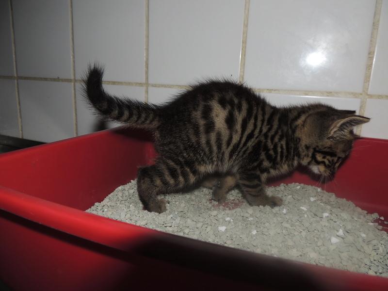 Arrivée de 4 chatons Pumba, Mario, Pépito et Pilou Jeudi_36