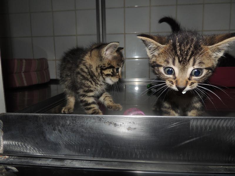 Arrivée de 4 chatons Pumba, Mario, Pépito et Pilou Jeudi_37