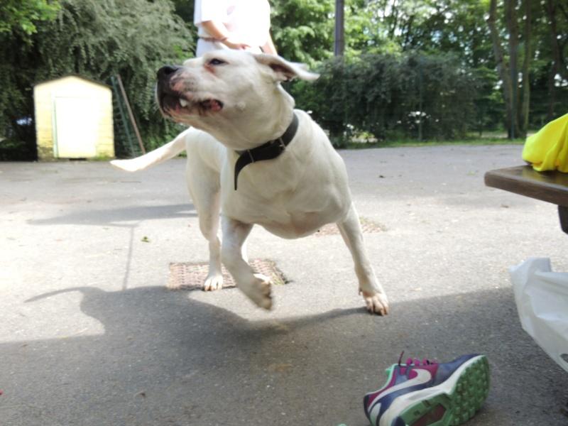 KAYA Femelle DOG ARGENTIN - Page 2 Mercre12