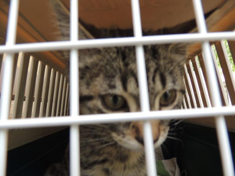 Adoption de MAKAO- Juillet 2016. Mercre49