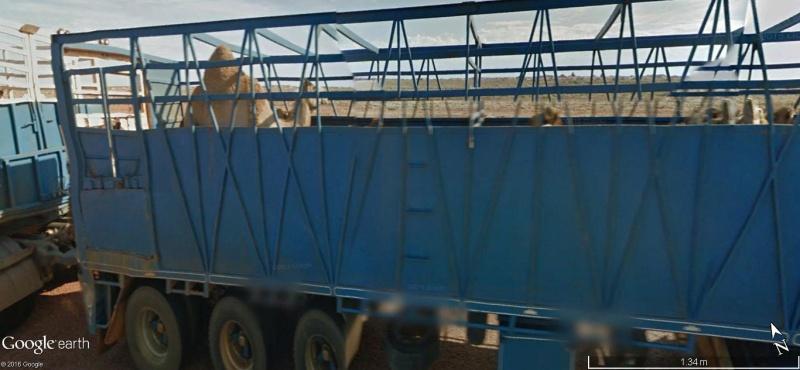 STREET VIEW : LA VIE DU RAIL EN AUSTRALIE - Page 3 212