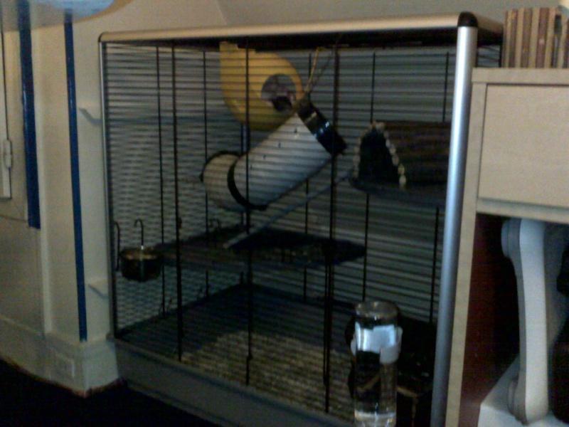 Vends Grande cage JENNY KD ( - 6 mois d'ut°) à Paris (75) 24122011