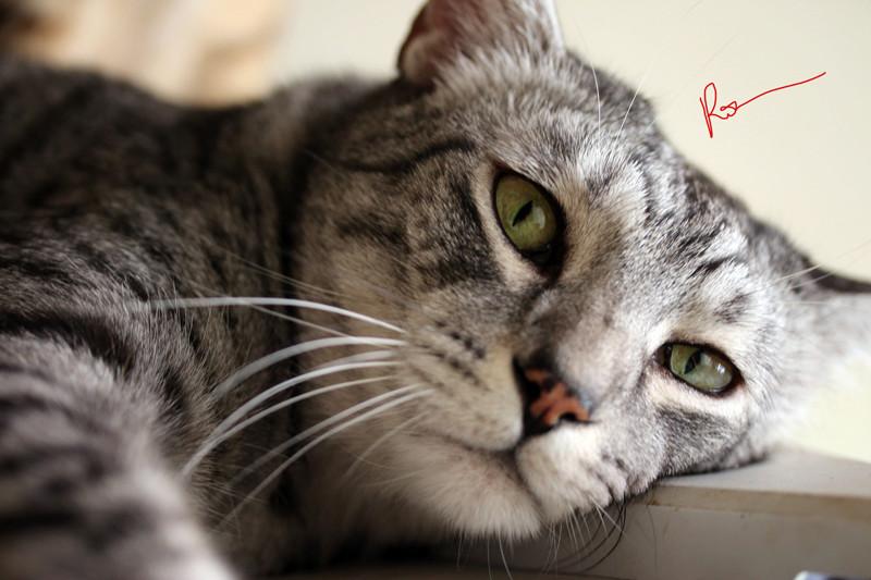 E'Sethi Accuente, le chaton voyageur - Page 16 Sethif10