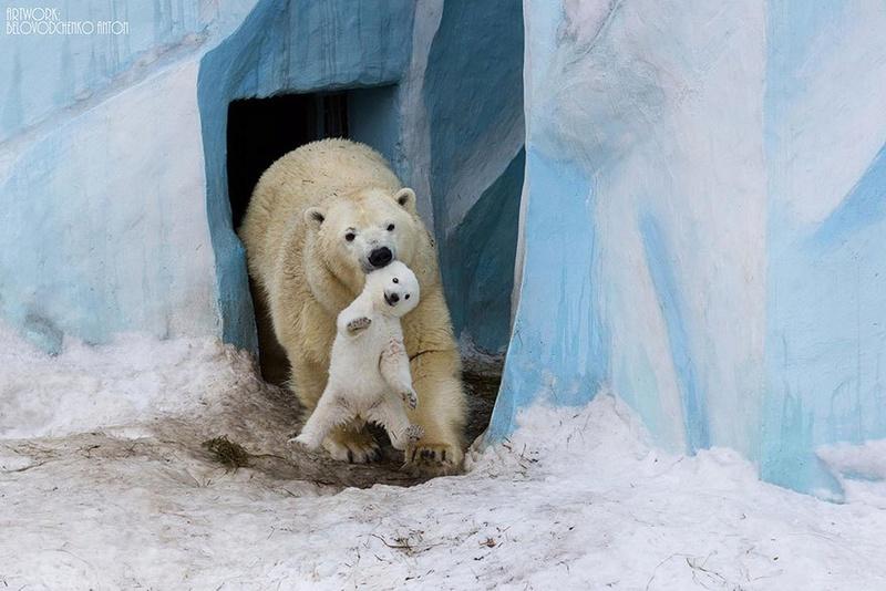 في صور: الأبوة والأمومة في مملكة الحيوان كما لم ترها من قبل Animal10