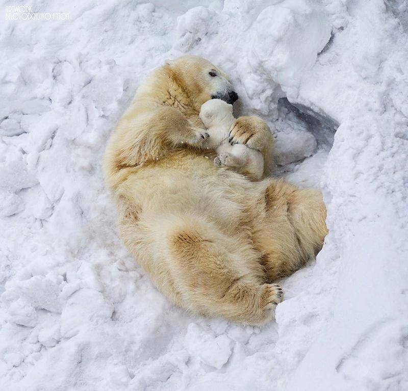 في صور: الأبوة والأمومة في مملكة الحيوان كما لم ترها من قبل Animal11