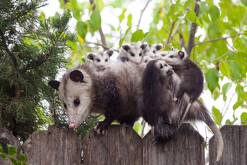 في صور: الأبوة والأمومة في مملكة الحيوان كما لم ترها من قبل Animal12