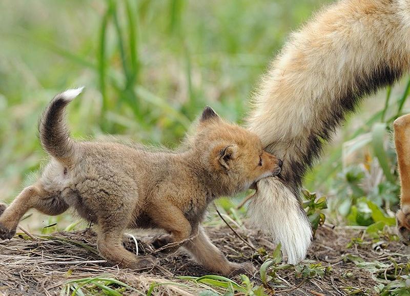 في صور: الأبوة والأمومة في مملكة الحيوان كما لم ترها من قبل Animal13