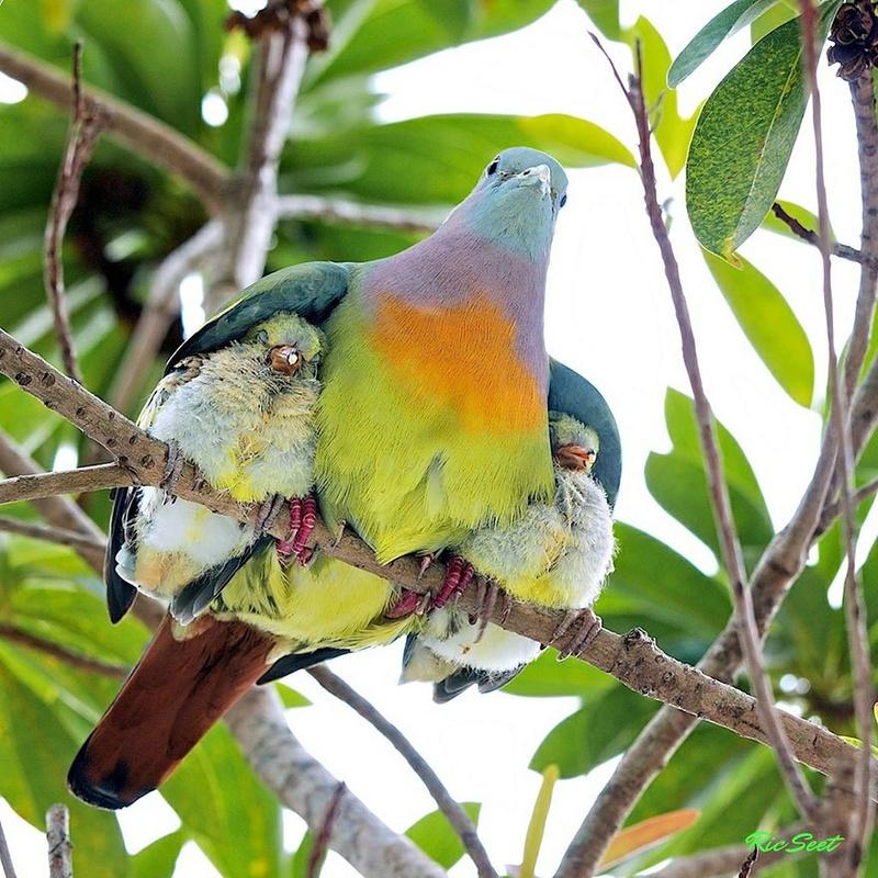 في صور: الأبوة والأمومة في مملكة الحيوان كما لم ترها من قبل Animal14