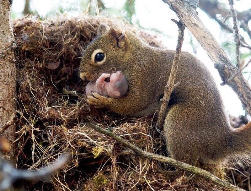 في صور: الأبوة والأمومة في مملكة الحيوان كما لم ترها من قبل Animal15