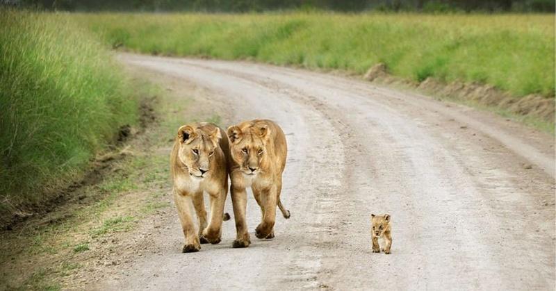 في صور: الأبوة والأمومة في مملكة الحيوان كما لم ترها من قبل Animal16