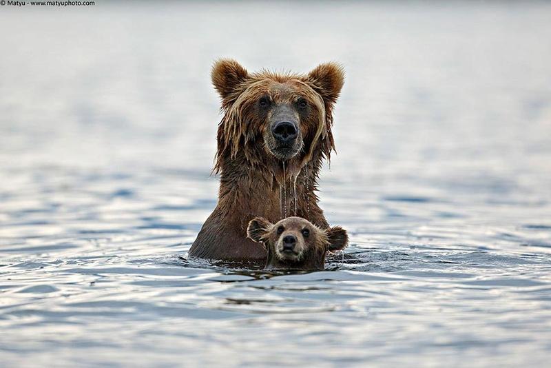 في صور: الأبوة والأمومة في مملكة الحيوان كما لم ترها من قبل Animal18